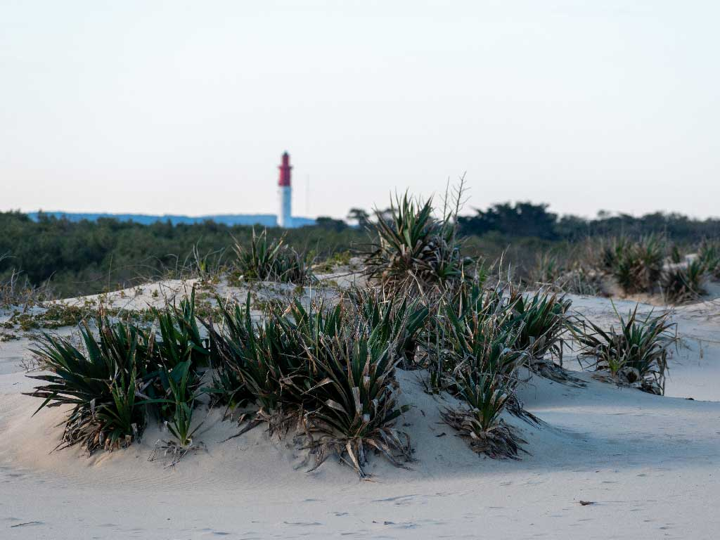 Le phare du Cap-Ferret depuis les dunes